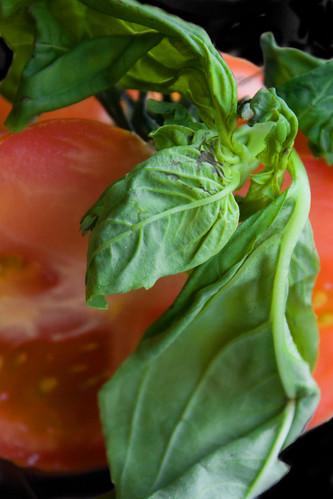 Tomato 83/365