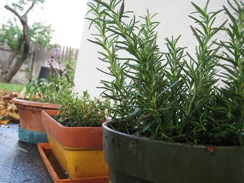 garden time, pt.1