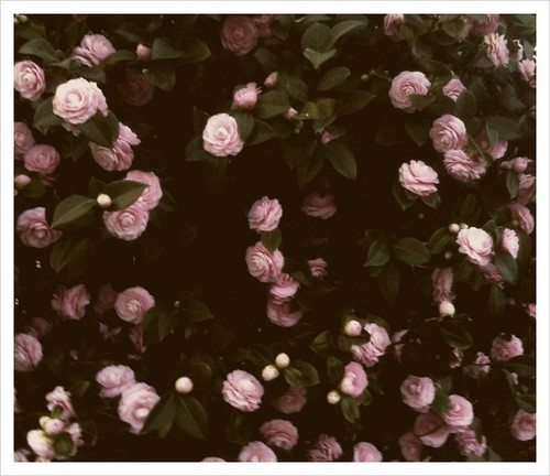 CameraBag_Photo_1001