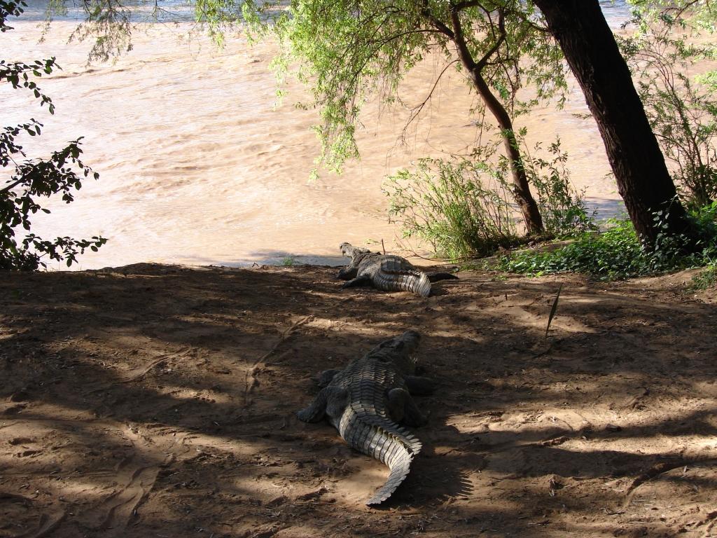Predators - Buffalo Springs / Samburu Game Reserve