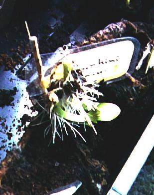 kein kaktus