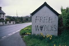 FREE W(H)ALES