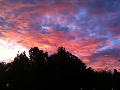 Lovely morning 3