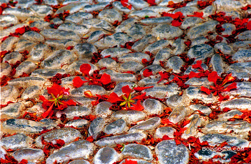 Red Flowers on a Cobble Stone Road
