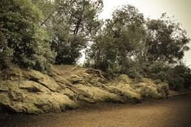 Bosque Parc Güell