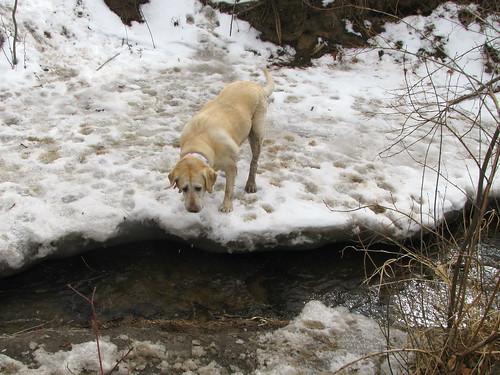 Sadie eats more snow