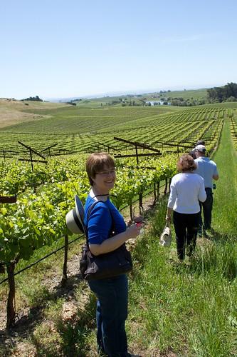Pinot Noir vineyard of Artesa Winery