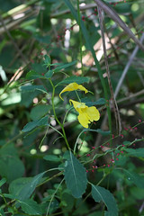 自然環境保全センターの花