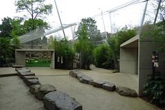 340 - 2017 07 01 - In het midden een inkijk op het chimpanseeverblijf, rechts het gorillaverblijf