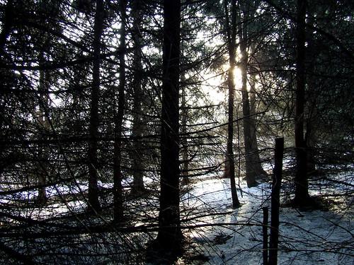 sprunce grove 3