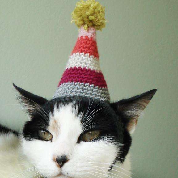 Chat, chapeau, lolcat, cat, hat, cute, mignon, tricot, crochet