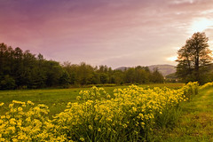 Sunset-on-the-meadow