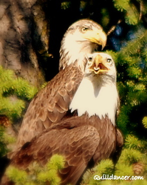 dos eagles