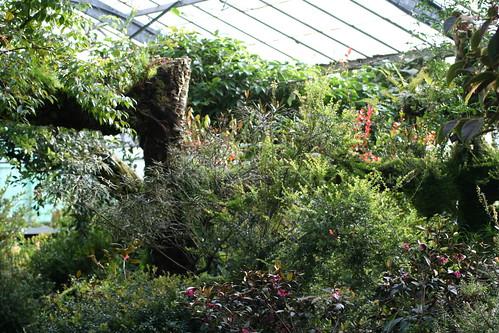 20090919 Edinburgh 20 Royal Botanic Garden 363