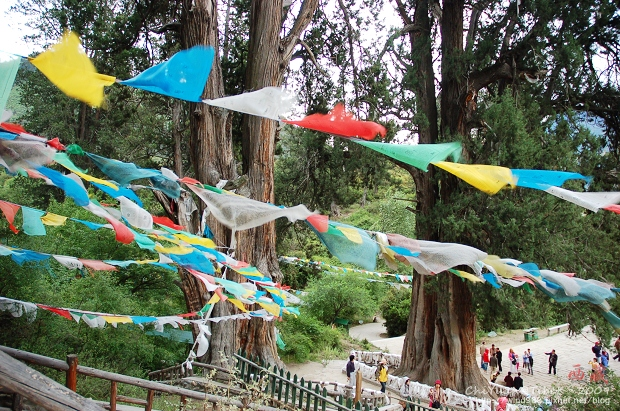 西藏林芝世界柏樹王園林11.jpg