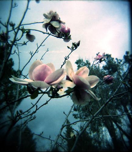 Holga Flower