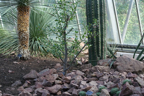 20090919 Edinburgh 20 Royal Botanic Garden 294