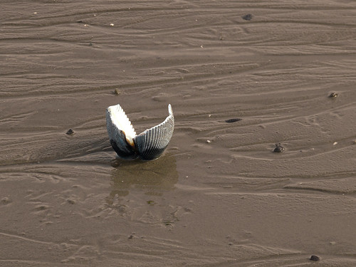 mud flippers