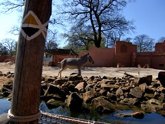 Im Zoo Hannover