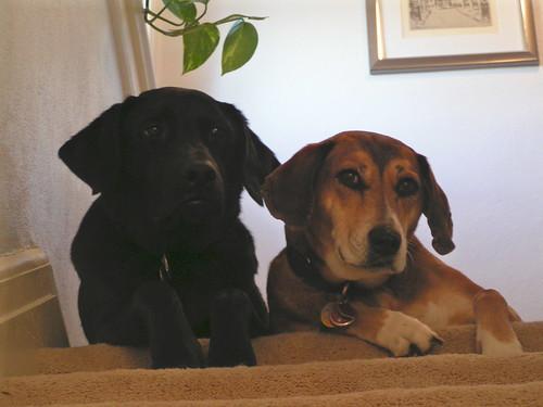 Bailey & Thea