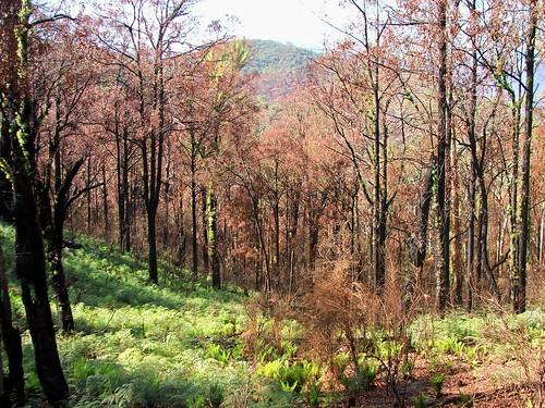 Bush Fire Recovery 4