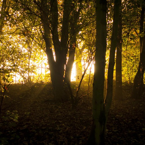 Autumn Fantasy : The Light Behind the Trees-Photo : Gilderic