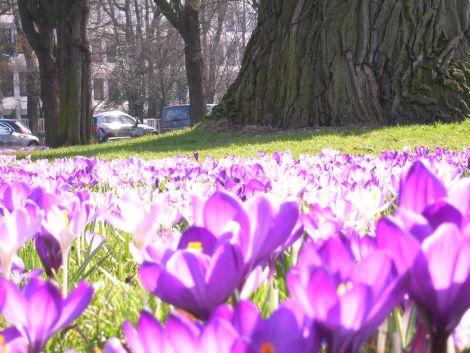 spring6_blog