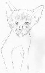 Cute kitten, drawn live on April 13, 2010 (sketch 2)