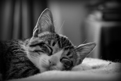 Placeres de la vida: dormir