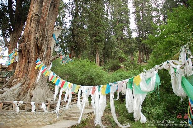 西藏林芝世界柏樹王園林10.jpg