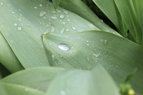 spots of rain on a green leaf