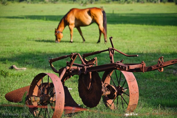 Old plow and horse