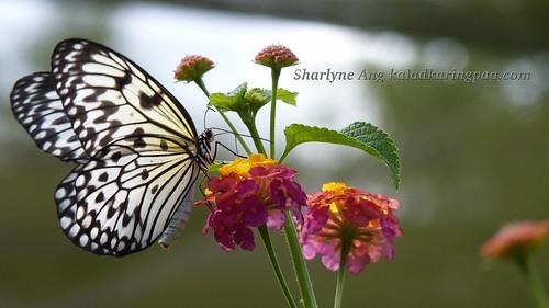 Butterfly Farm in Puerto Princesa 5