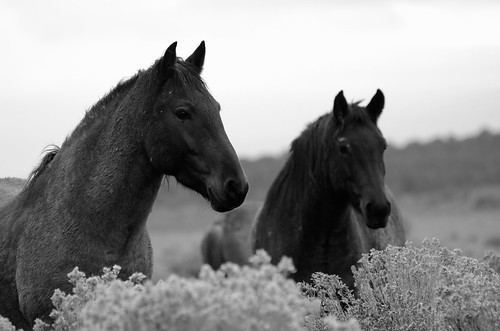 NM Wild Horses nwm (46)