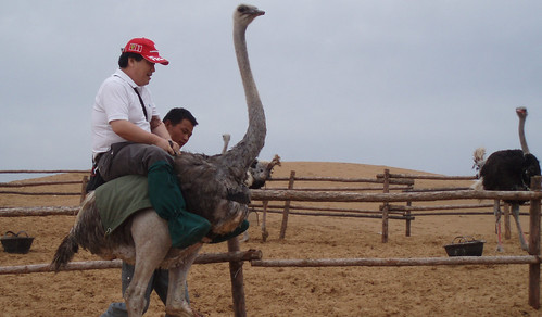 China 2008, Tenger desert