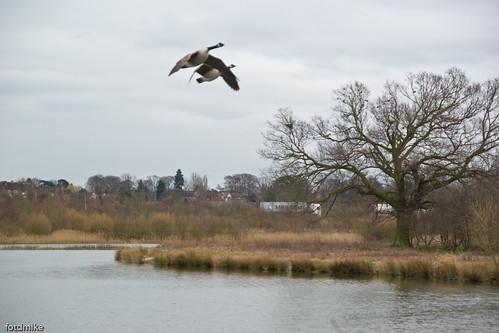 Stanwick Lakes _G104123