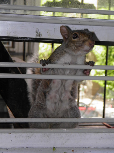 Mommy Squirrel Begs