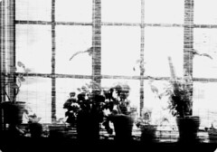 Dining room casement windows
