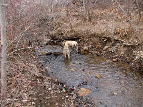 Girls downstream