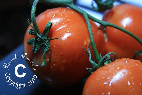 365-50 Tomatos