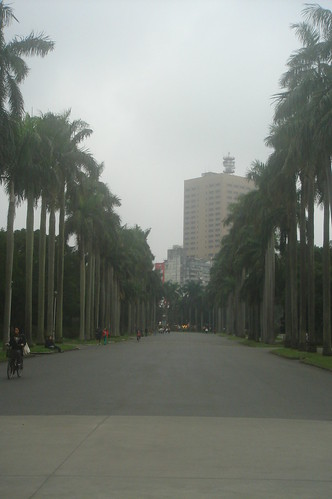 椰林大道_面向新生大門