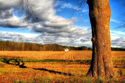 Cornfields of Autumn