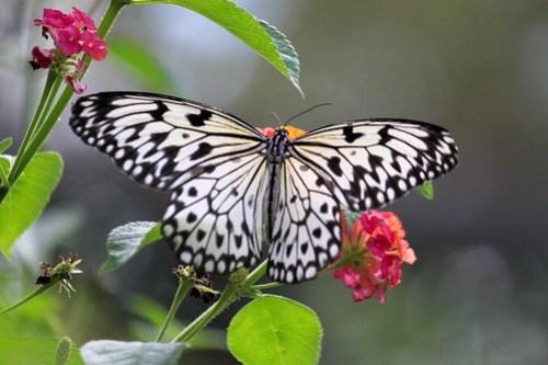 Butterfly at Butterfly Garden - 3
