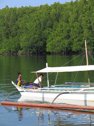 Mangroves in Calauit Island