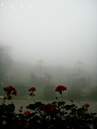 tea in fog