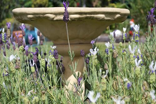Lavender Birdbath