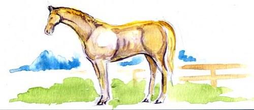 horsie4