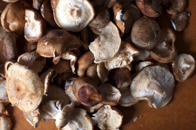 torn wild mushrooms