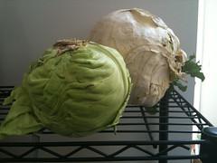 Cabbage comparison
