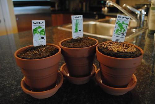 Herb Garden Day 1